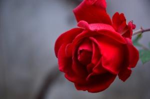 Eine Blume für Breiser